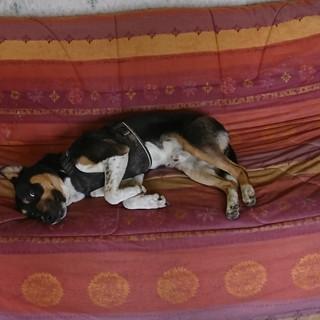 Après le jeu, la sieste !