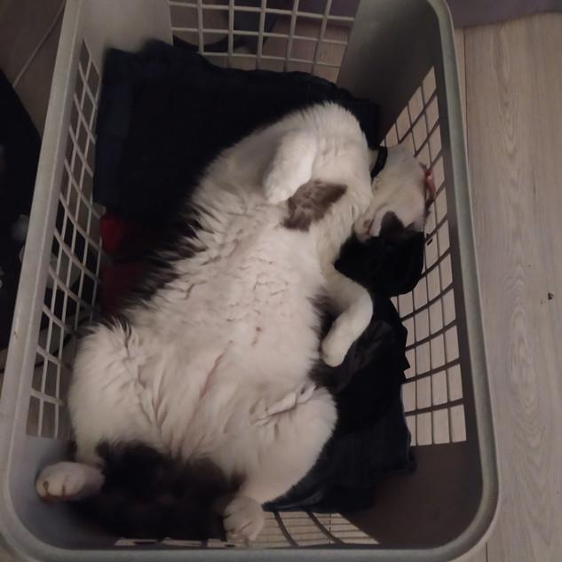 Pour un chat heureux, acheter un panier à linge.