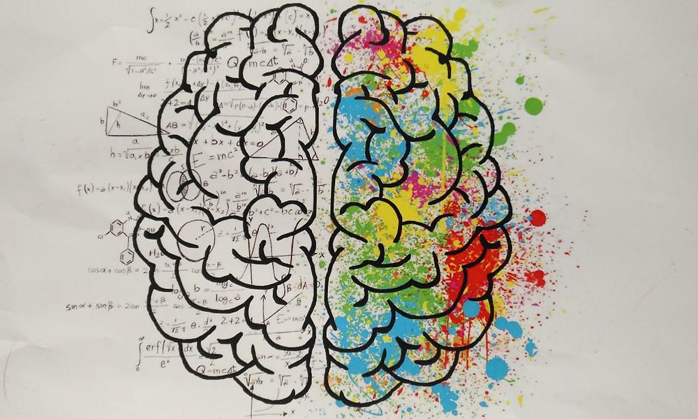 Cerveau couleur