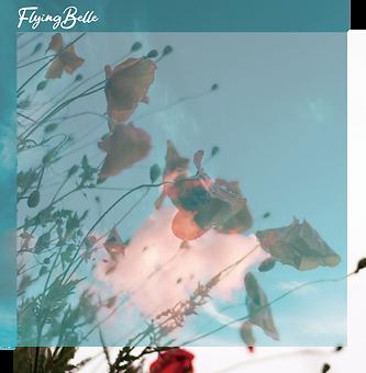 Flying Belle1.png
