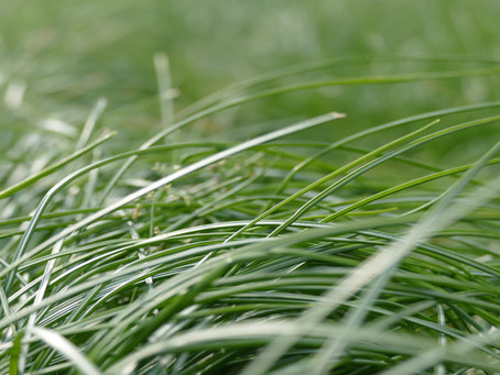 Que se passe t-il à la safranière au printemps?