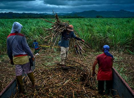 """""""Sobre o problema da terra, da classe camponesa e da revolução agrária nas Filipinas"""""""