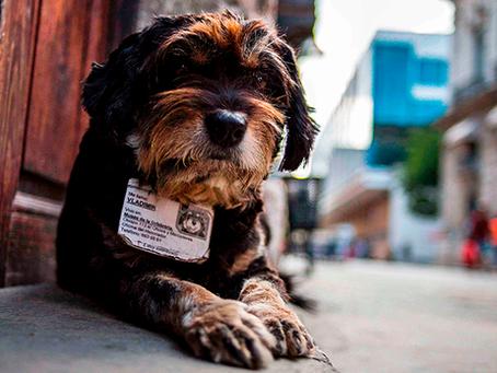 Cuba aprova Decreto-Lei que garante os direitos dos Animais