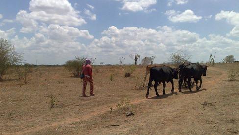 A situação do sertão alagoano: Inhapi