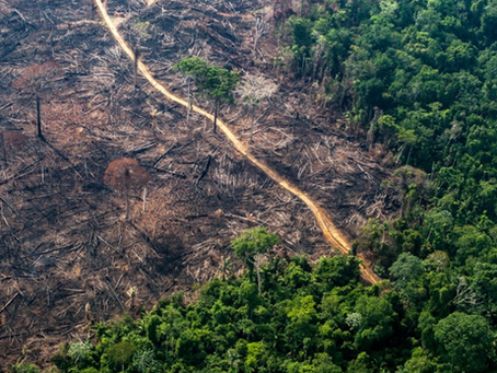 """""""Ao menos 13 milhões de árvores foram derrubadas ilegalmente no Xingu em dois meses"""""""