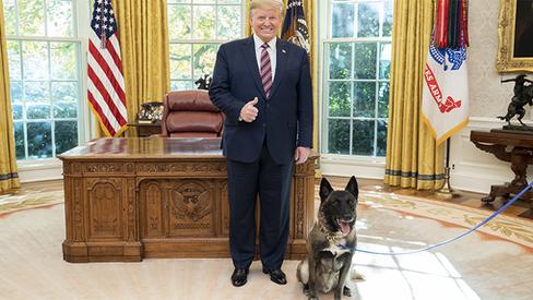 """""""Os cachorros de Trump"""""""