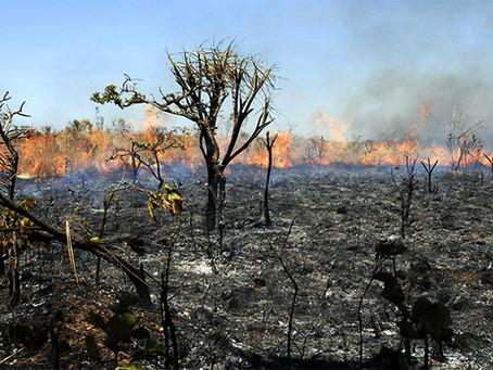 """""""Aumento de queimadas e de conflitos na Amazônia são efeito do golpe?"""""""