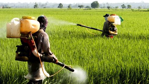 """""""Imperialismo na Alimentação e na Agricultura e Propagação de Patógenos Mortais"""""""