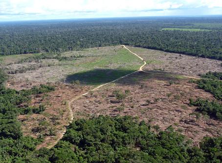 """""""Amazônia: o poder dos piratas do agronegócio"""""""