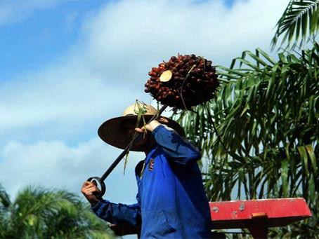 Lavradores ocupam fazenda na região metropolitana de Belém