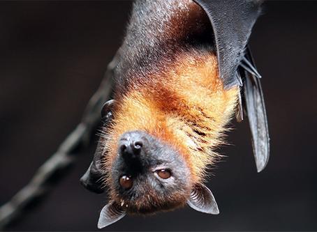 """""""'Não coloquem a culpa no morcego': saúde e crise capitalista"""""""