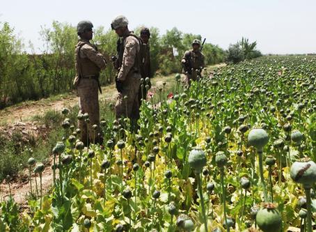 Afeganistão: A invasão dos EUA e da OTAN fez disparar a produção de ópio