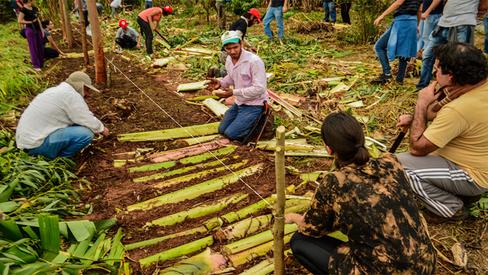 Atividade de agrofloresta é realizada pelo MST em Gália (SP)
