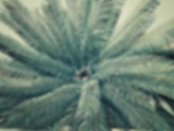 palm-tree-926641.jpg