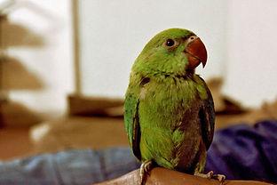 visite à domicile perroquet Montpellier