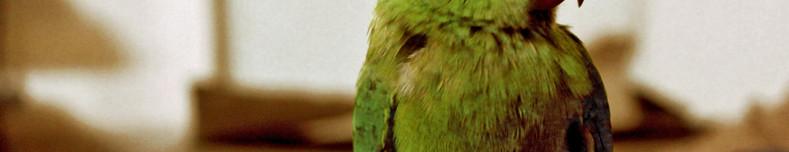 Bird pet sitter