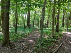 DarkFire Airsoft Forest