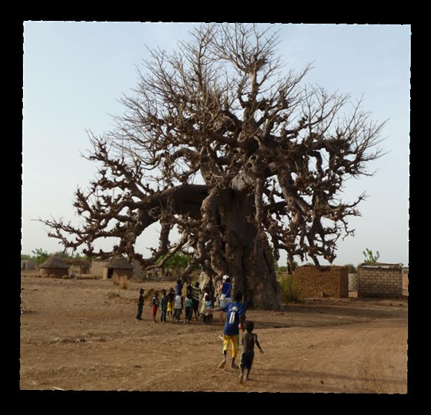 Il grande Baobab