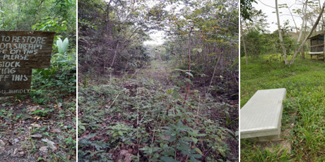 A Failed Vision of Environmental Restoration