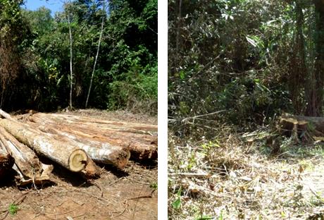 Shocking Destruction in Maya First's Rain Forest Preserve