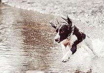 Loisir chien Montpellier