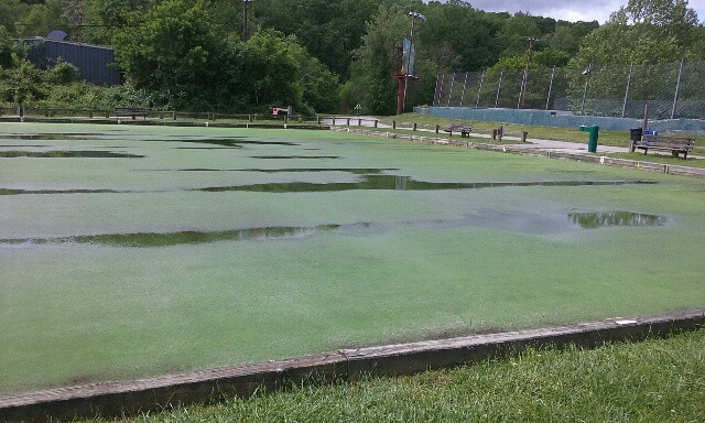 The need for a new green is apparent as the current green is plugged and drains very slowly. The water also indicates depressions in what should be a totally flat surface.