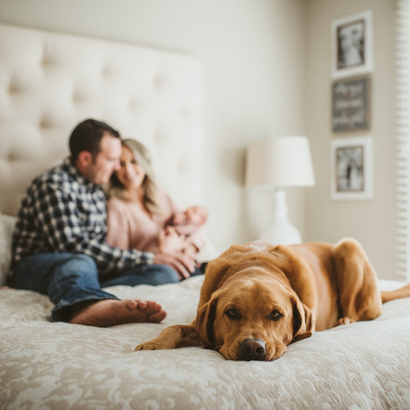 Piper | Lifestyle Newborn Photography | Napa, CA