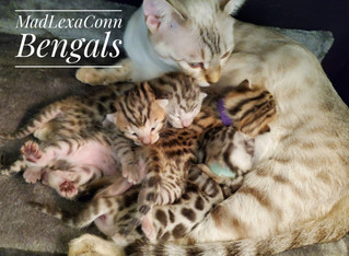 Artemis with 4 kittens