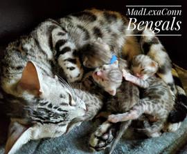 Freya with 3 kittens