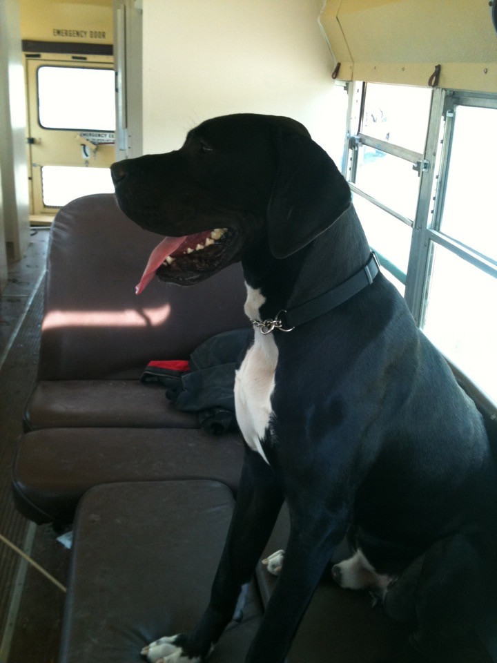 Malachi going with me to get a bus to co