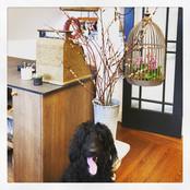 Frankie the Flower Shop Dog