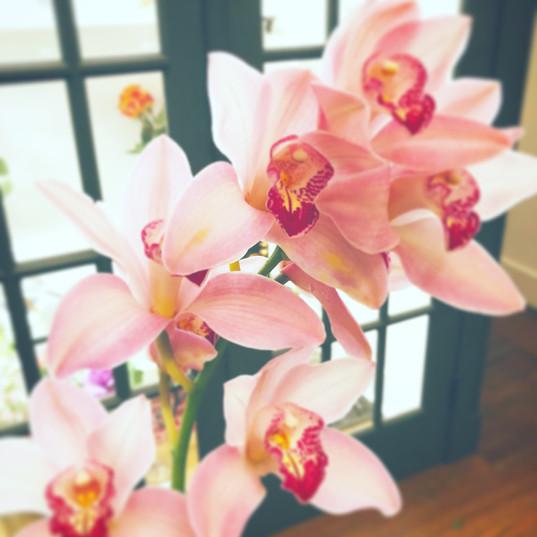 Cymbidium Orchid Stem