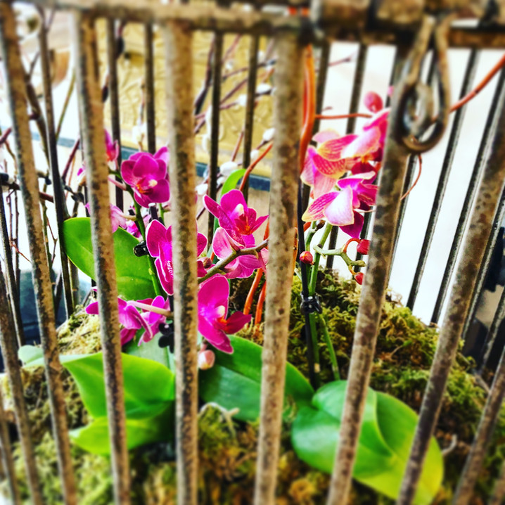 Orchids in a Bird Cage