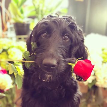 Frankie at Valentine's Day