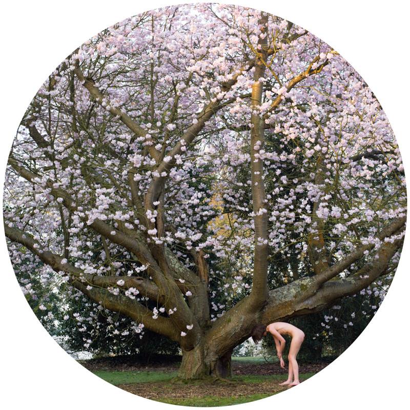 Prunus x Juddii, Anisa