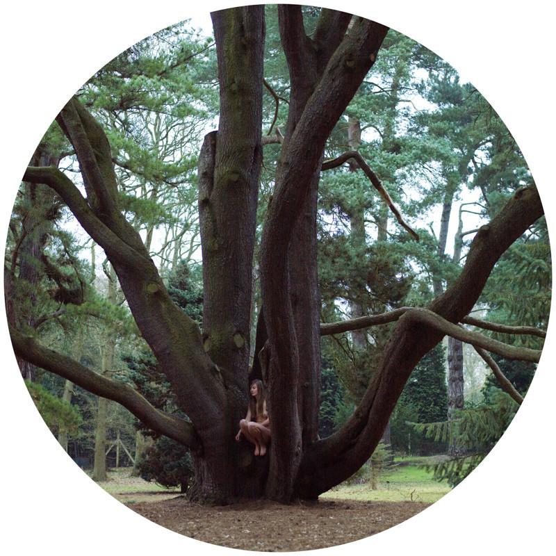 Pinus Contorta Var Contorta, Polly