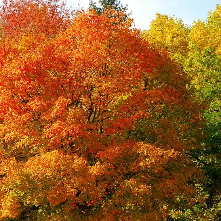 Hof Armada - Waldbaden - Herbstleuchten