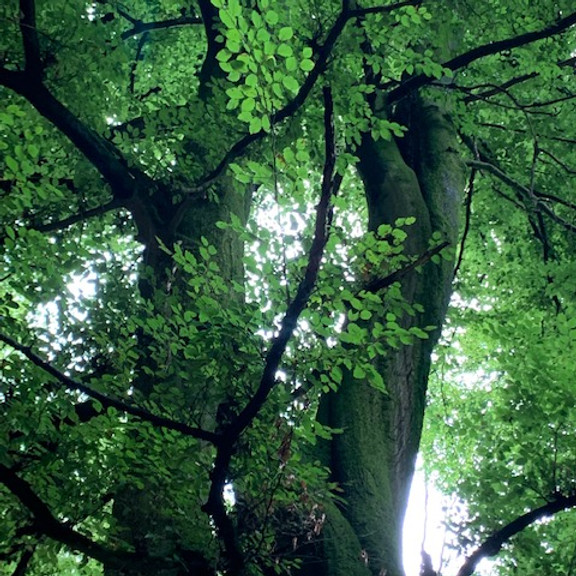 NATUR ATELIER Geokultur – THEMA Bäume
