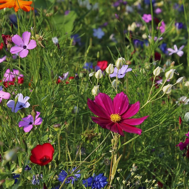 Hof Armada - naturnaher Garten, Frühling