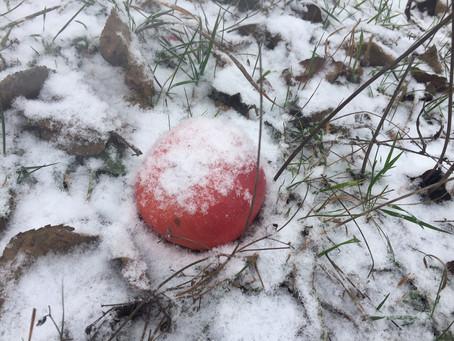 Wintermeditation  -                                   Leise rieselt der Schnee