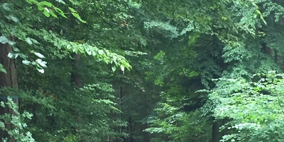 NATUR ATELIER Waldbaden - Thema HEILUNG