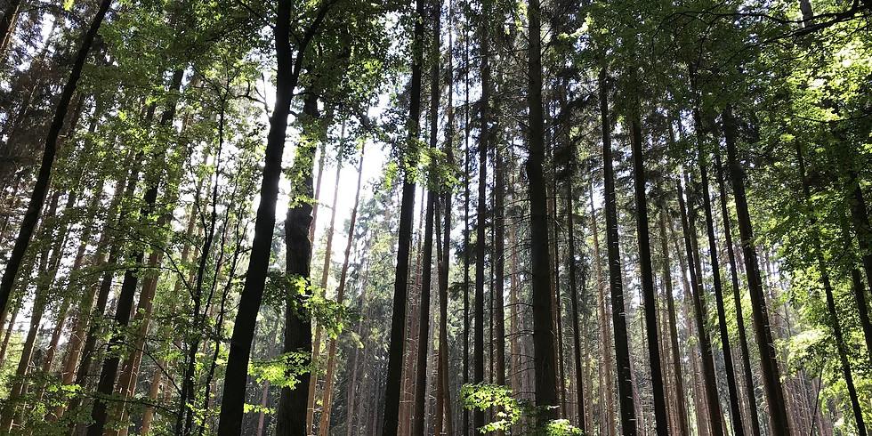 cult-touren: Der Wald ruft - WALDBADEN tut Körper, Geist und Seele gut