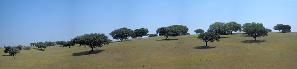 Panorama Alenteje oaks.JPG