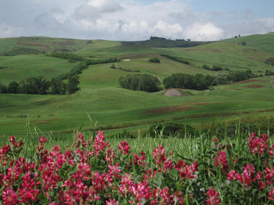 110 Toscana.jpg