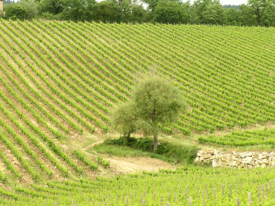 105 Toscana0035.JPG