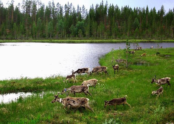 028 Finland.JPG