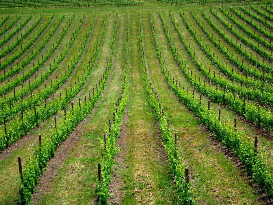 085 Toscana0026.JPG