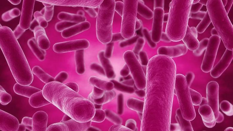 bacillus.jpg