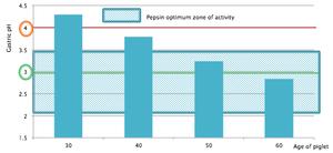 chart pepsin optimum activity