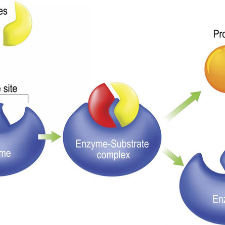 ARE YOUR ENZYMES REALLY ACTIVE?
